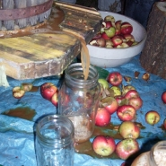 Cider running out from a press.