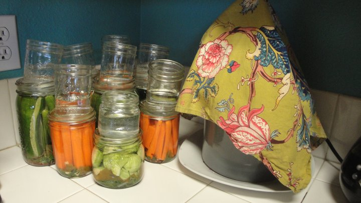 Lots of fermenting vegetables, in jars and weighed down by smaller jars.