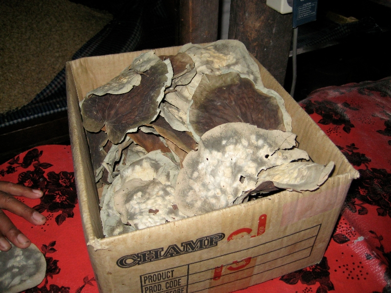 A box of molded waru leaves.