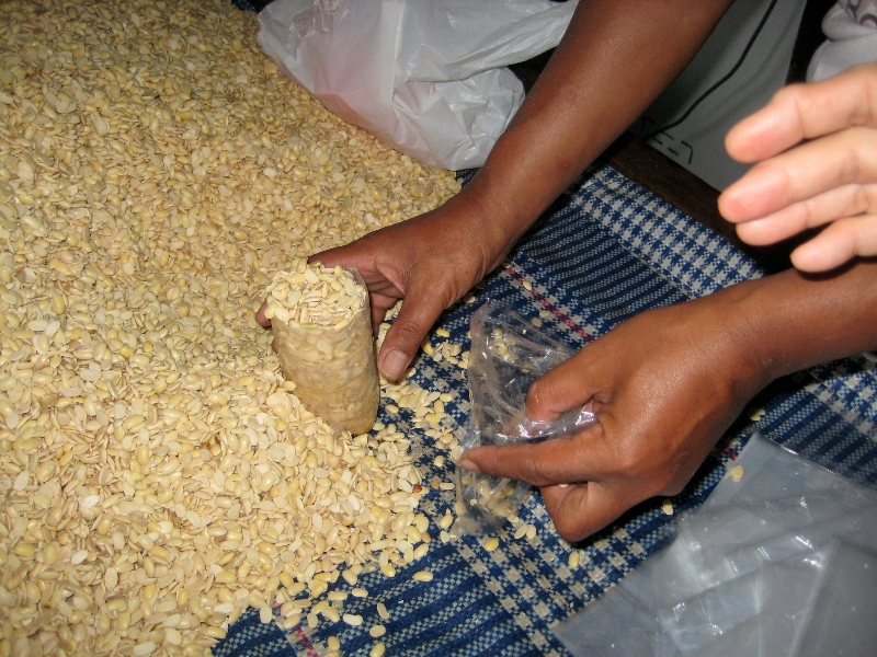 Measuring beans to fill perforated plastic bags.